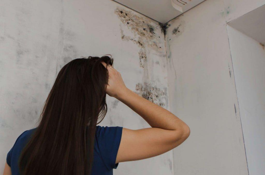 o mofo e umidade presentes no ambiente são fatores causadores de alergias.
